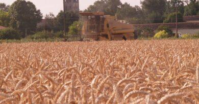 Céréales export